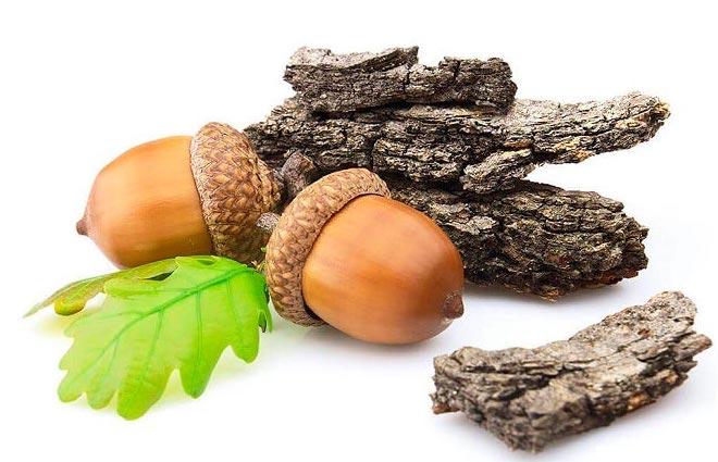 Кора дуба: лечебные свойства, применение и 7 противопоказаний