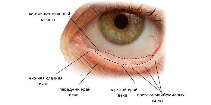 Конъюнктивальный мешок глаза