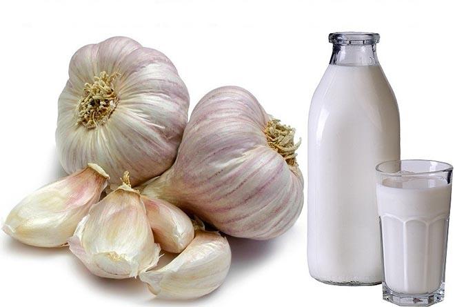 Чеснок с молоком: польза и вред