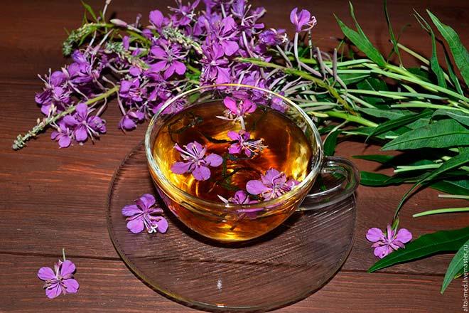Иван-чай: рецепты, применение, свойства