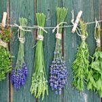 Противогрибковые травы для внутреннего применения