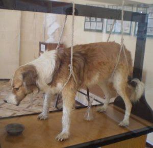 Собака Павлова: опыты