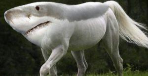Тип изображенного животного
