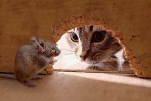 Благородный мышонок - притча